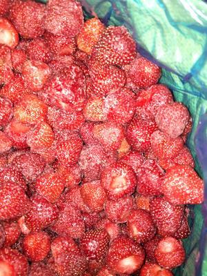 辽宁省丹东市凤城市哈尼草莓 20克以下