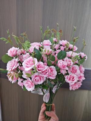 广西壮族自治区南宁市上林县玫瑰花冠王