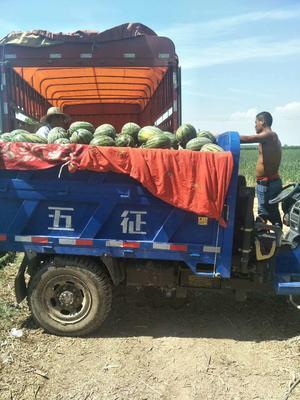 这是一张关于甜王西瓜 有籽 1茬 9成熟 8斤打底的产品图片