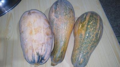 这是一张关于黄南瓜 2~4斤 长条形的产品图片