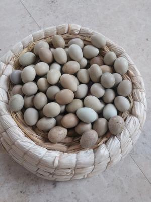 广西壮族自治区玉林市博白县桂花雀蛋 孵化 礼盒装