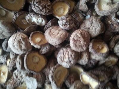 河北省承德市平泉县普通香菇 箱装 1年以上