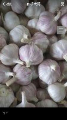 这是一张关于紫皮大蒜 混级统货 四六瓣 的产品图片