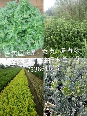 山东省潍坊市临朐县营养钵卫茅