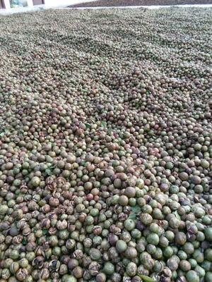 广西壮族自治区南宁市邕宁区茶叶籽油