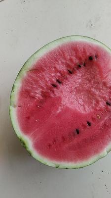 这是一张关于京欣西瓜 有籽 1茬 9成熟 7斤打底的产品图片