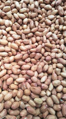 这是一张关于手剥花生米大粒花生米 干货 花生米的产品图片