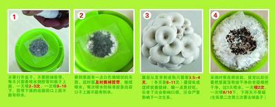 广东省茂名市高州市蘑菇