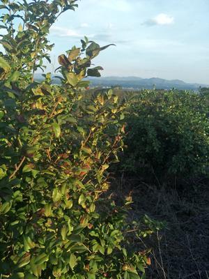 广西壮族自治区玉林市博白县油茶