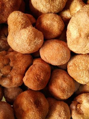 黑龙江省大兴安岭地区大兴安岭地区加格达奇区野生干猴头菇 袋装 1年以上