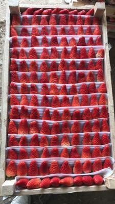 山东省青岛市平度市甜宝草莓 40克以上