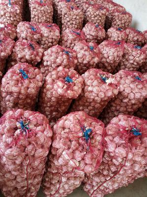 这是一张关于商河大蒜 5.5-6.0cm 多瓣蒜的产品图片