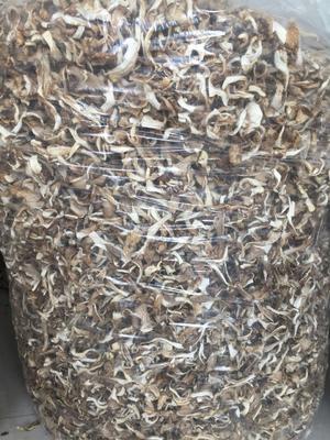 山东省德州市禹城市鲜平菇 3-5cm 厚 浅灰色