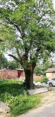 贵州省贵阳市花溪区皂角树