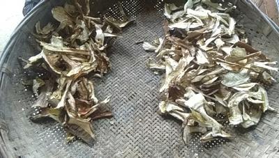 云南省文山壮族苗族自治州丘北县美味牛肝菌 3.0% 一级