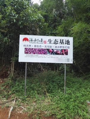 广西壮族自治区玉林市容县红菇干 袋装 1年