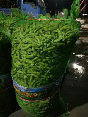 山东省临沂市郯城县绿宝石毛豆 6~12克