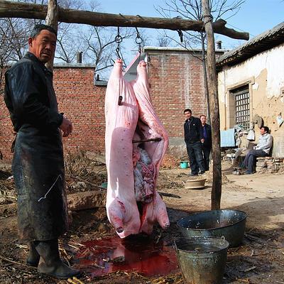 湖北省襄阳市谷城县猪肉类 生肉
