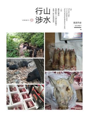 河北省张家口市涿鹿县藏香猪猪苗