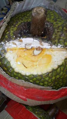 广西壮族自治区崇左市宁明县越南菠萝蜜 10-15斤