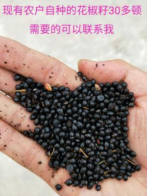 河南省洛阳市洛龙区花椒种子