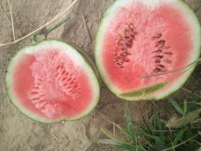 河南省商丘市宁陵县甜王西瓜 有籽 1茬 8成熟 6斤打底