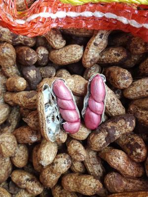 云南省昆明市官渡区鲜花生 鲜货 带壳花生