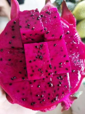这是一张关于红皮红肉火龙果 中(5-7两)的产品图片