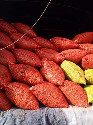 这是一张关于鲜花生 鲜货 带壳花生的产品图片
