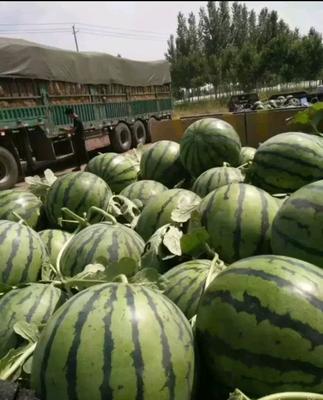 这是一张关于双星西瓜 有籽 1茬 8成熟 6斤打底的产品图片