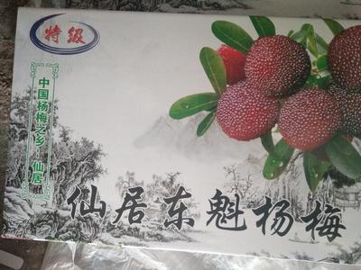 浙江省台州市仙居县东魁杨梅 5 - 6cm
