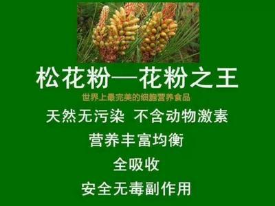 云南省丽江市古城区松花粉 6-12个月