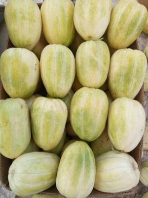 山西省忻州市忻府区伊丽莎白甜瓜 0.3斤以上