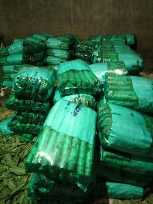 河北省保定市定州市青皮尖叶莴苣 40-50cm 1.5~2.0斤
