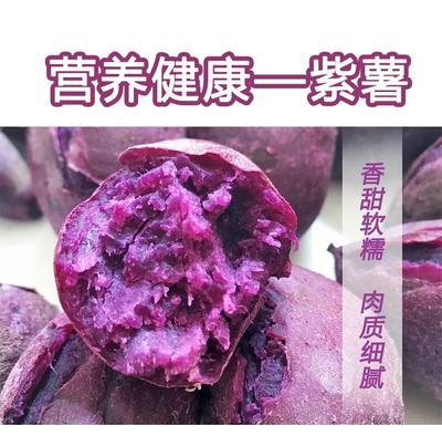 广东省湛江市坡头区紫罗兰紫薯 3两以上