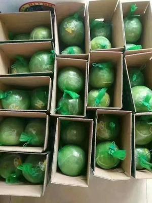 广西壮族自治区河池市环江毛南族自治县翡翠柚 1.5斤以上