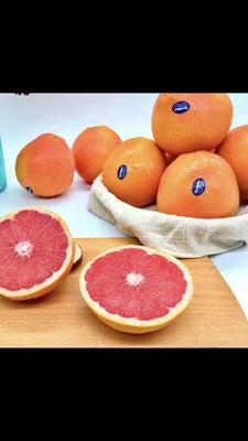 广西壮族自治区崇左市龙州县南非西柚 1斤以下