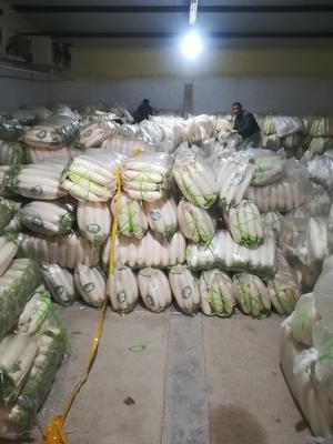 河北省张家口市万全县春雷白萝卜 2.5~3斤