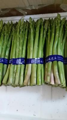 北京大兴区绿芦笋 24cm以上 13mm以上