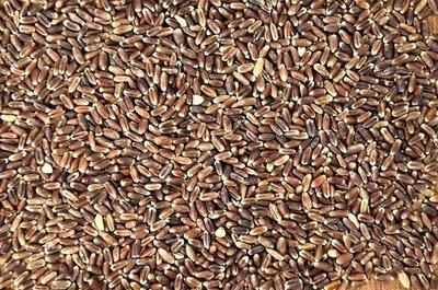 这是一张关于黑小麦的产品图片
