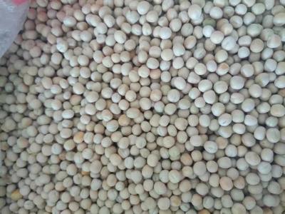 山东省青岛市胶州市白豌豆 5-7cm 饱满