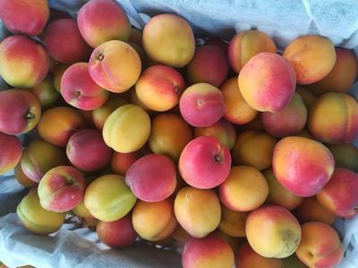 这是一张关于串枝红杏 45mm以上的产品图片