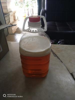 这是一张关于土蜂蜜 桶装 98% 2年以上的产品图片