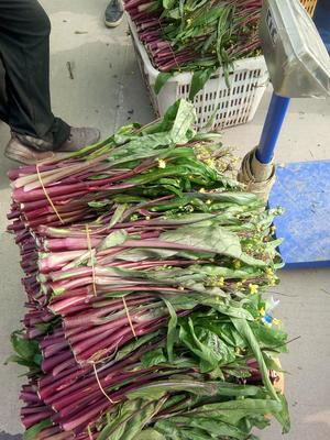 北京大兴区红菜苔 30~35cm