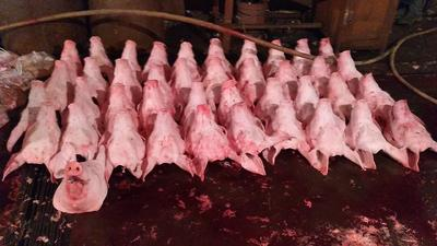 这是一张关于猪头肉 生肉的产品图片