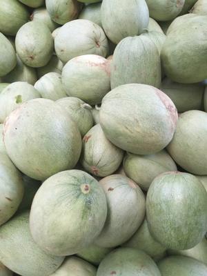 陕西省汉中市城固县绿宝甜瓜 0.5斤以上