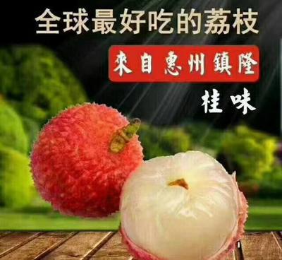 广东省惠州市惠阳区桂味荔枝 1.5cm