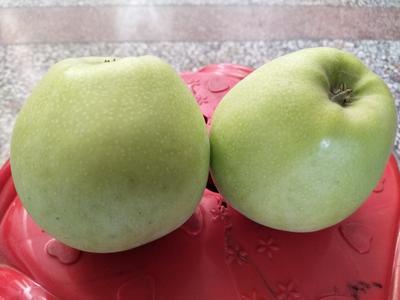 这是一张关于富平苹果 光果 翠绿 65mm以上的产品图片