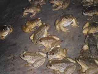 这是一张关于石蛙的产品图片