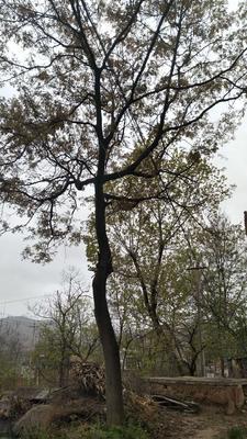 四川省德阳市绵竹市皂角树